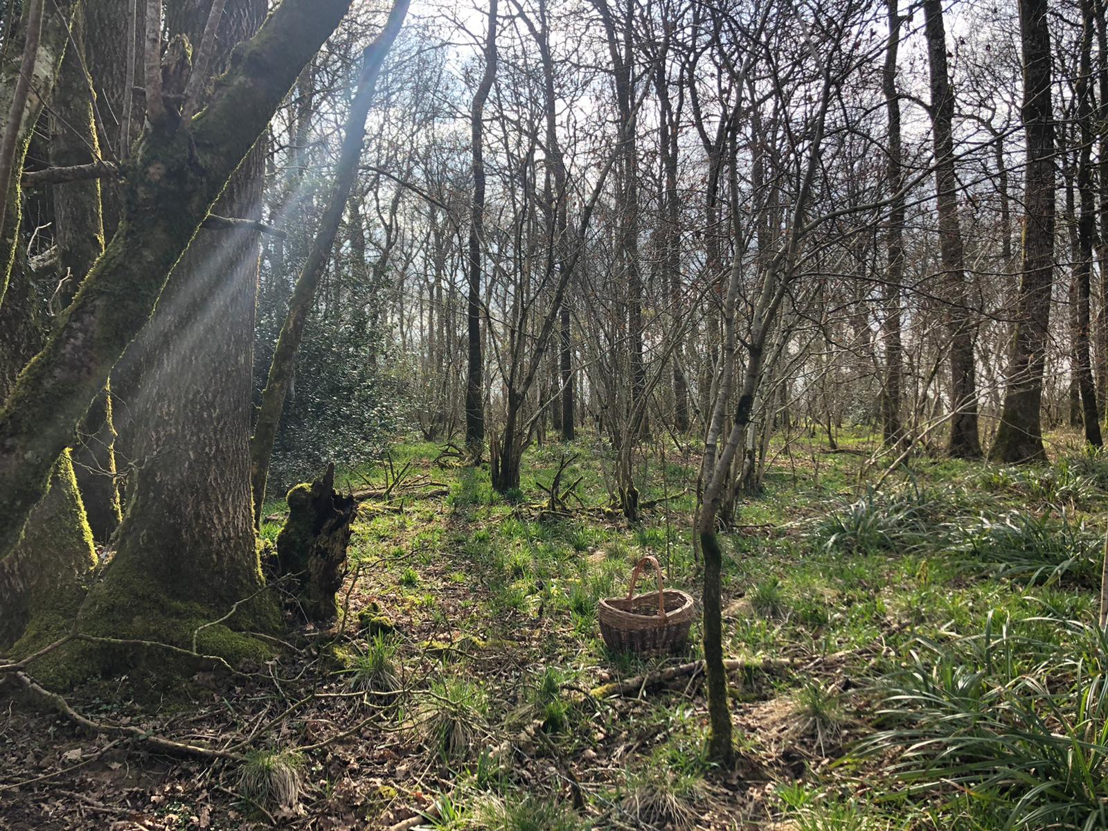 Photo of Field 725's woods with basket in foreground