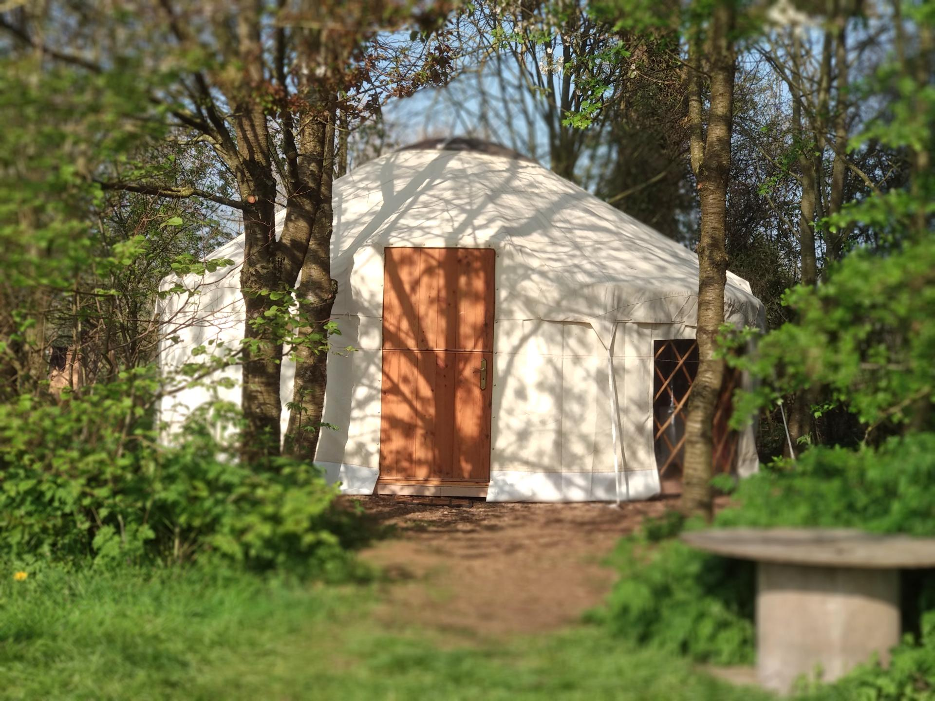Our woodland yurt nestled amongst trees